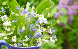 Kwiaty dla matka dnia powitania Obraz Stock