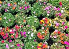 Kwiaty dla Wiszących dekoracj Zdjęcie Stock