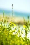 kwiaty do żółty morskiego zdjęcia stock