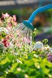 kwiaty do wody Zdjęcie Stock