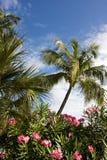 kwiaty drzewa Zdjęcia Stock