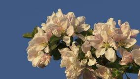 kwiaty drzewa zbiory