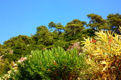 Kwiaty drzewa & góry, Obrazy Stock
