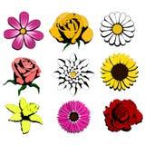 kwiaty dziewięć Ilustracji