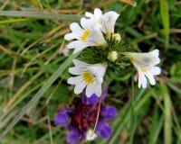 Kwiaty - Flores Zdjęcia Stock