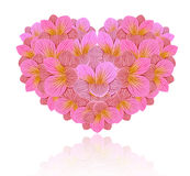 Kwiaty frezja w postaci serca Obrazy Royalty Free