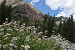 Kwiaty, góra, las Obrazy Royalty Free