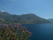 Kwiaty, góry i Kotor ` s, trzymać na dystans Kotor miasteczko, Montenegro fotografia stock