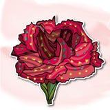 Kwiaty, goździki Obrazy Royalty Free