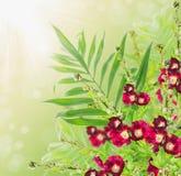 Kwiaty graniczą z czerwonym ślazem na pogodnym tle zdjęcie royalty free