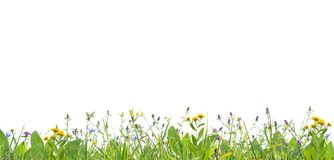 kwiaty grass dzikiego Obrazy Stock