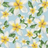 kwiaty hawajczyka Fotografia Stock