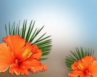 kwiaty hibiskus piaskowatą tekstury tropikalną ilustracji