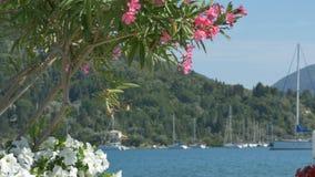 Kwiaty i łodzie w schronieniu zdjęcie wideo