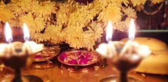 Kwiaty i światło obraz royalty free