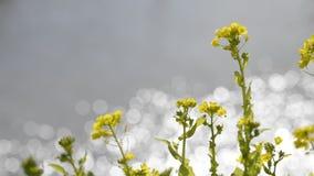 Kwiaty i błyskotliwość zdjęcie wideo