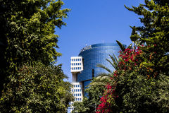 Kwiaty i budynku widok Stary Jaffa Obraz Stock