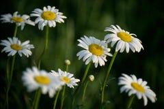 Kwiaty i Ciemnozielony Obrazy Royalty Free