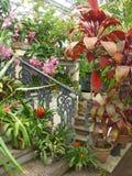 Kwiaty i dekoracyjne rośliny obraz stock