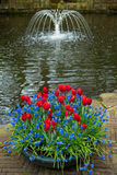 Kwiaty i fontanna Zdjęcia Stock