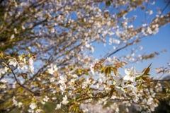 Kwiaty i gałąź fotografia stock