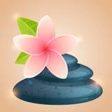 Kwiaty i kamienie dla zdroju Zdjęcia Stock
