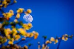 Kwiaty i księżyc Obraz Stock