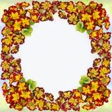 Kwiaty i liście pierwiosnek Dekoracyjny skład na akwareli tle zdjęcia royalty free