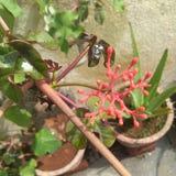 kwiaty i liście, rośliny, czerwień kwiaty, zieleń opuszczają obraz stock