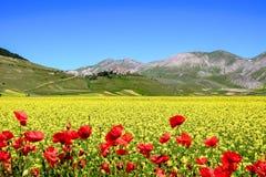 Kwiaty i miasteczko Fotografia Royalty Free