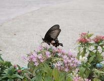 Kwiaty i motyl Zdjęcie Stock