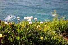 Kwiaty i ocean wcielający Fotografia Royalty Free