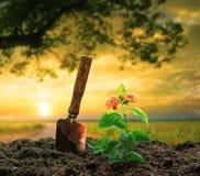 Kwiaty i ogrodnictwa narzędzie zasadzają przeciw pięknemu światłu słonecznemu w g Obraz Stock