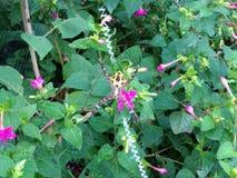 Kwiaty i pająka gniazdeczko Obraz Royalty Free