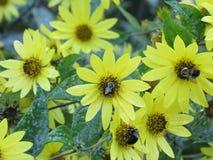 Kwiaty i pszczoły obrazy royalty free