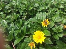 Kwiaty i pszczoły Zdjęcie Stock