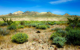 Kwiaty i pustynia Obrazy Royalty Free