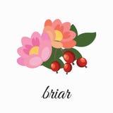 Kwiaty i różani biodra ilustracja wektor