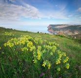 Kwiaty i ranek w górze obrazy royalty free