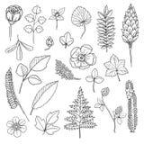Kwiaty i rośliny Obraz Stock