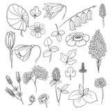 Kwiaty i rośliny Zdjęcie Stock