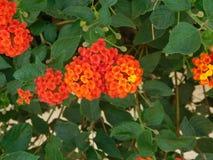 Kwiaty i rośliny Fotografia Royalty Free