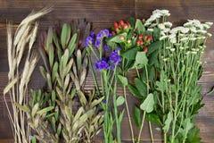 Kwiaty i rośliny na drewno stole Obrazy Royalty Free
