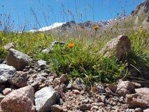 Kwiaty i rośliny w górach Fotografia Stock