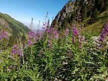 Kwiaty i rośliny w górach Zdjęcie Royalty Free