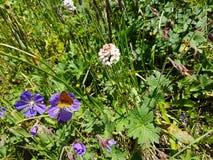 Kwiaty i rośliny w górach Zdjęcia Royalty Free