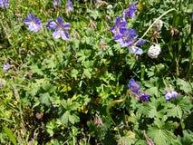 Kwiaty i rośliny w górach Zdjęcie Stock