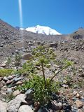 Kwiaty i rośliny w górach Zdjęcia Stock