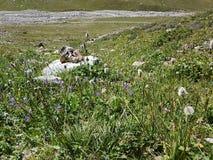 Kwiaty i rośliny w górach Obrazy Stock