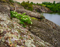 Kwiaty i skały Obraz Stock